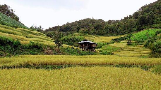 rice-fields.jpg.9f5fd3d3366b354585d132107b4a1f79.jpg